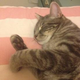 Sleepy Teddy